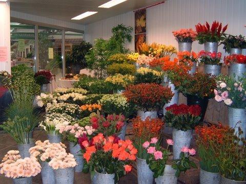 Bezoek het leukste tuincentrum van Oost Vlaanderen - Tuincenter Vincent