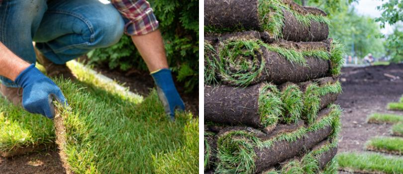 Graszoden kopen? | Bestel Online | tuincenter-vincent.be