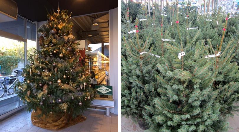 Kerstbomen kopen? | Kerst bij Tuincenter Vincent | Tuincenter-vincent.be