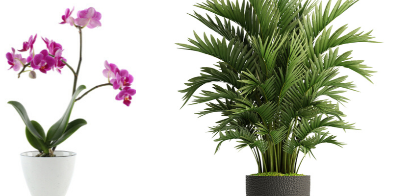 Plant cadeau geven - Tuincenter Vincent