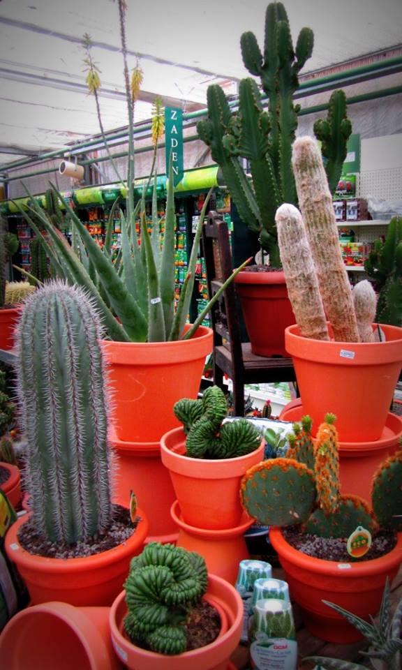 Planten kopen doet u bij Tuincentrum Vincent in Dendermonde