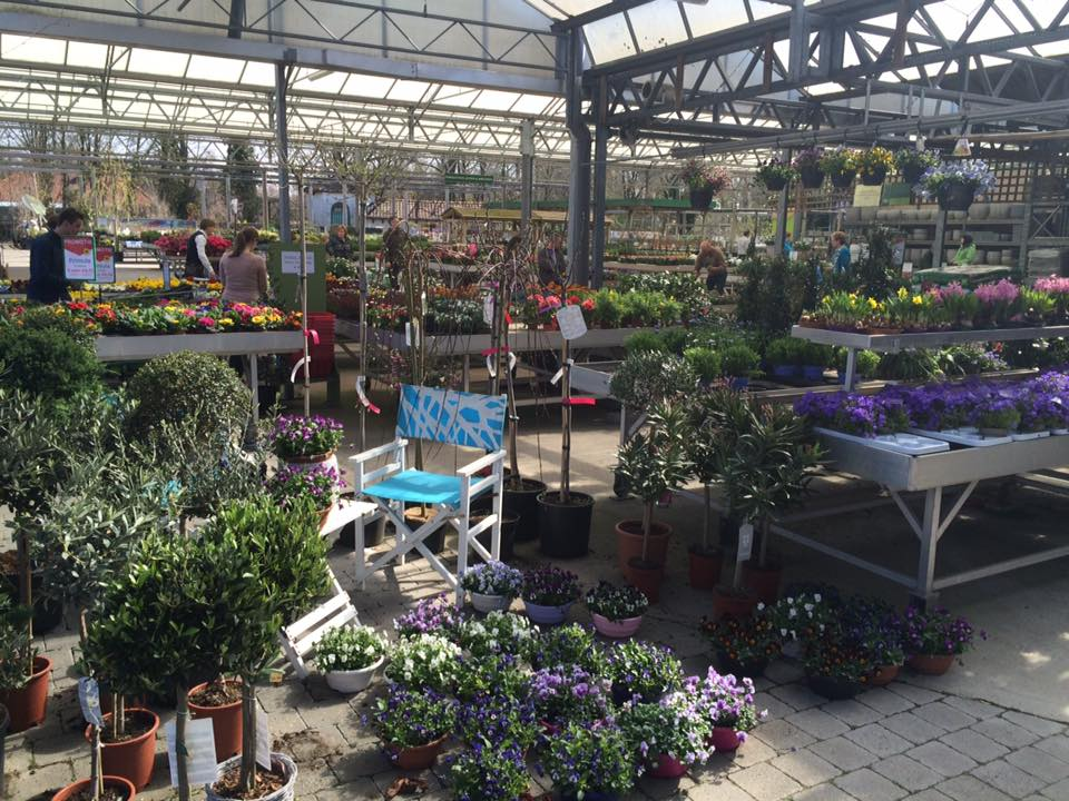 Planten koopt u bij Tuincentrum Vincent in Dendermonde