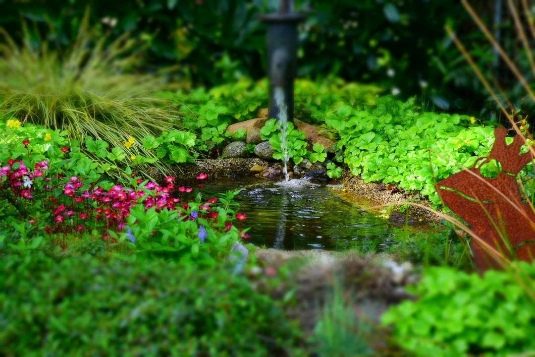 Tuinvijver met helder, gezond water