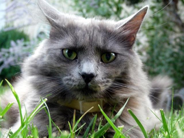 Prachtige kat in de tuin