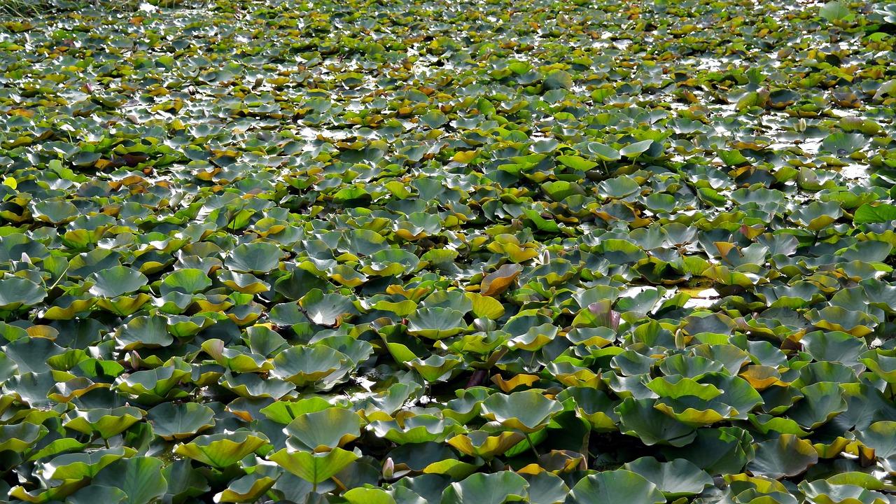 Vijver vol met waterplanten
