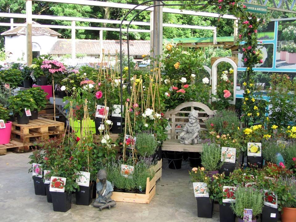 Breed assortiment planten bij Tuincentrum Vincent nabij Aalst