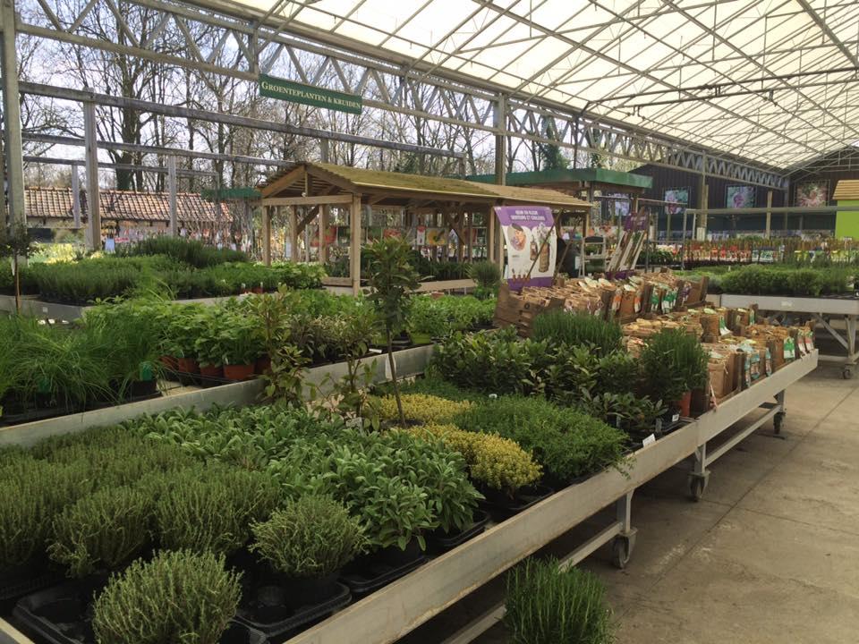 Prachtige vaste planten bij ons tuincentrum nabij Wetteren