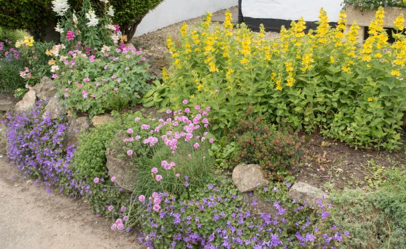 Kleurrijke vaste planten nabij Wetteren