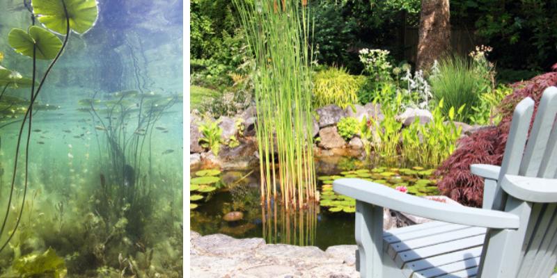 Vijver- en Waterplanten kopen bij Tuincenter Vincent