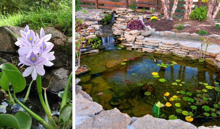 Vijverfolie en beschermdoek voor uw vijver kopen? | Tuincenter Vincent