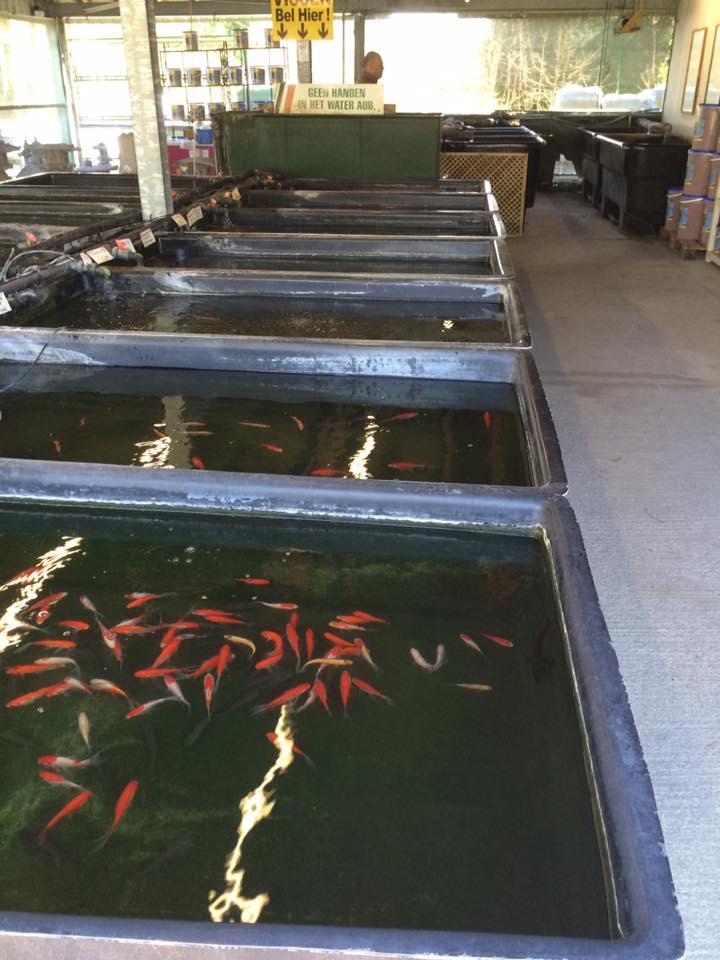 Vissen kopen bij ons tuincentrum in Oost-Vlaanderen