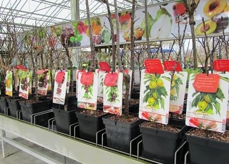 Online tuincentrum voor het onderhouden en decoreren van uw tuin