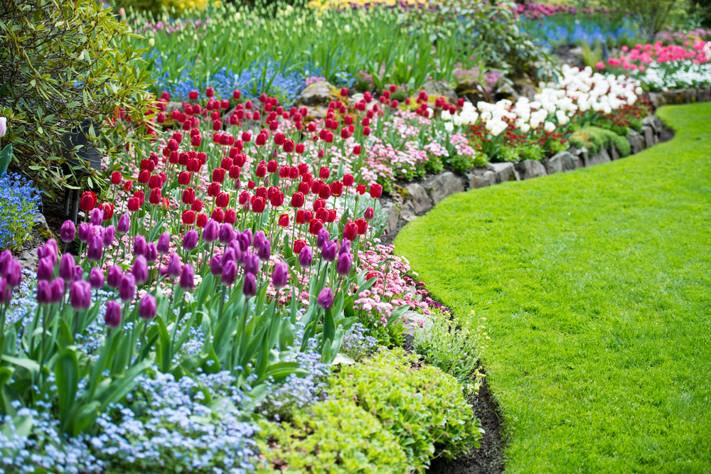 Tuin- en Terrasplanten kopen bij Tuincenter Vincent | Tuincenter-Vincent.be