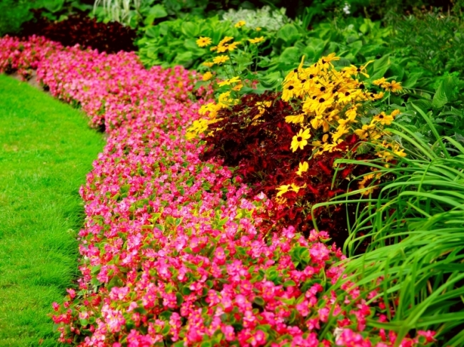 Tuinplanten   Artikelaanbod   Tuincenter Vincent