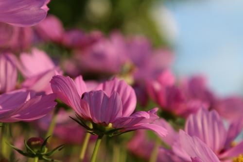 Tuinplanten kopen in Oost Vlaanderen? Kom naar Tuincenter Vincent!