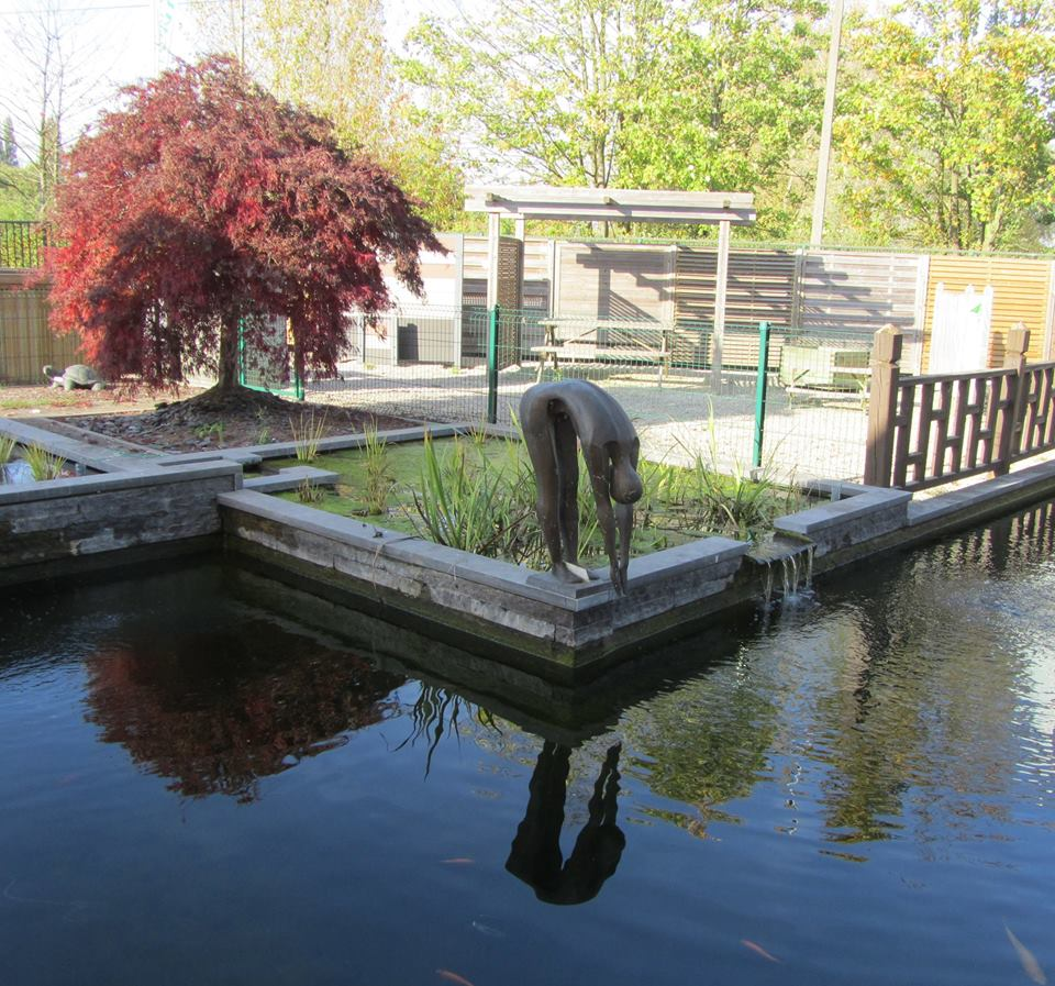Zwemvijver: vijverwinkel Oost-Vlaanderen